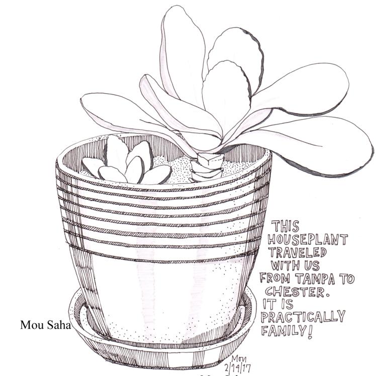 houseplant_2-14-17_mous